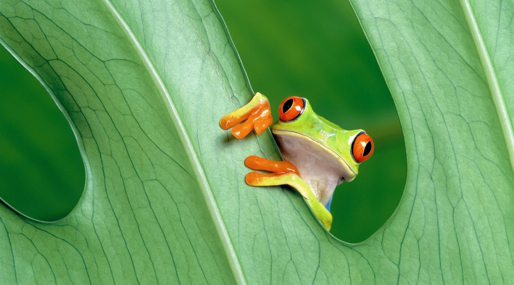 Red-Eyed-Tree-Frog-1920x1200